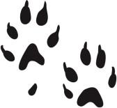 17458846-ferret-paws-print